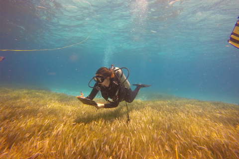A scuba diving researcher takes notes on the sea grass